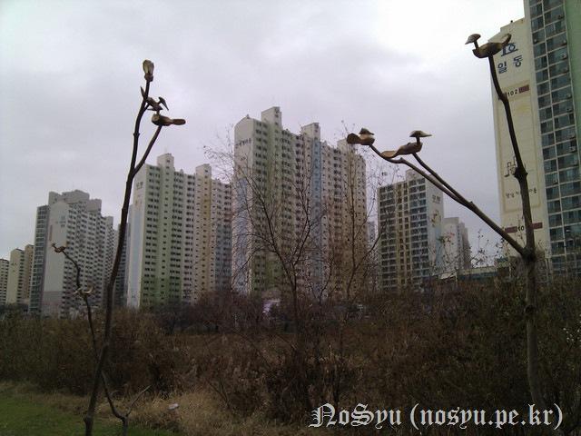 IMG_20110103_150415