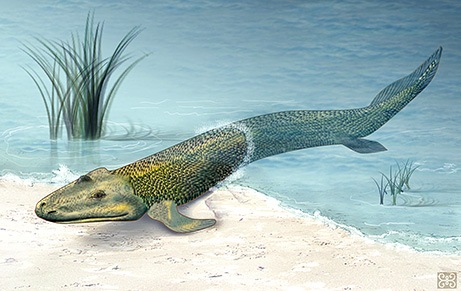090211-03-tiktaalik-missing-link_big
